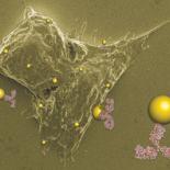 Наночастицы нашли применение в медицине. Они атакуют раковые клетки!