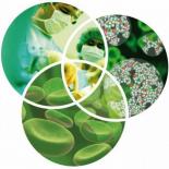 Наномедицина и ее перспективы в дальнейшем